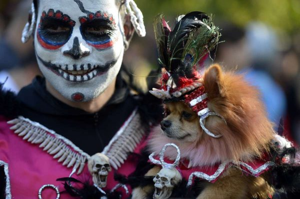 A dog dressed in Halloween costume participates in the Halloween Dog Parade in Tompkins Square Park in New York, the United States, Oct. 25, 2014. The Annual Halloween Dog Parade was held in New York on Saturday. Hundreds of dogs in costumes and thousands of spectators attended the Dogs competition and the parade to cerebrate the upcoming Halloween.