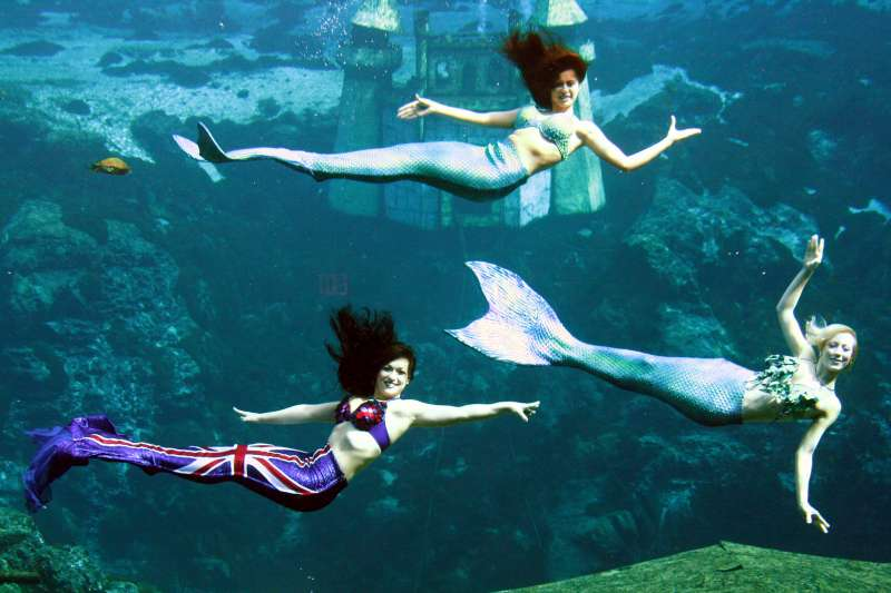 Mermaids at  London Aquarium