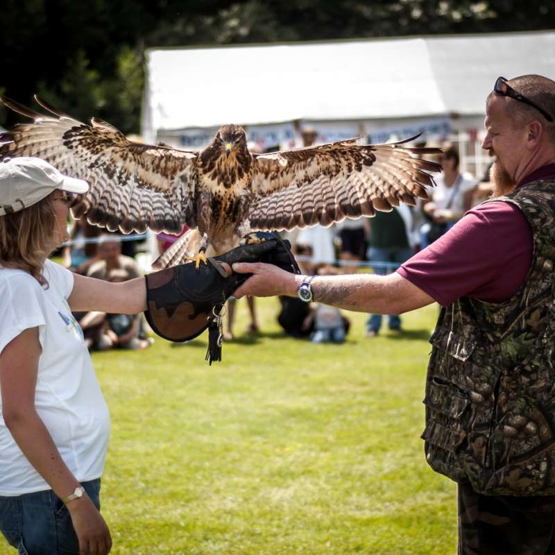 A falconer at the BEN annual Vintage and Classic Car Rally (File)