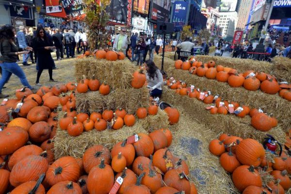 A pop-up pumpkin patch is set up for Halloween in Times Square as a promotion for the App Google Photos, in New York, the United States, Oct. 29, 2015. Visitors can pick from tons of free pumpkins and enjoy live pumpkin carvings.