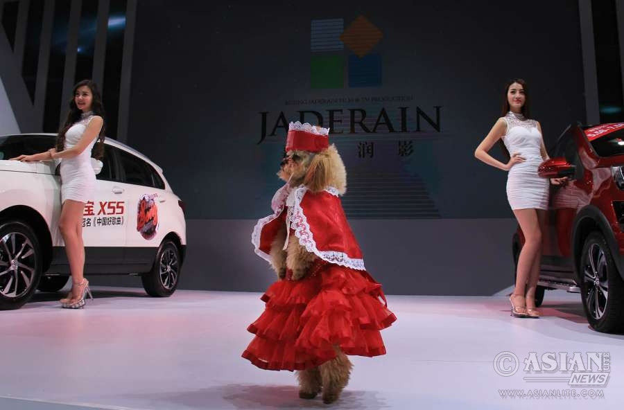 A dog model poses on an exhibited car at the opening of the 25th Ningbo International Auto Expo in Ningbo, east China's Zhejiang Province