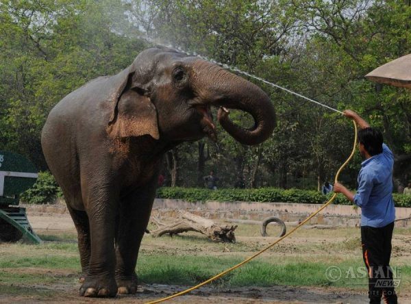An elephant gets a shower