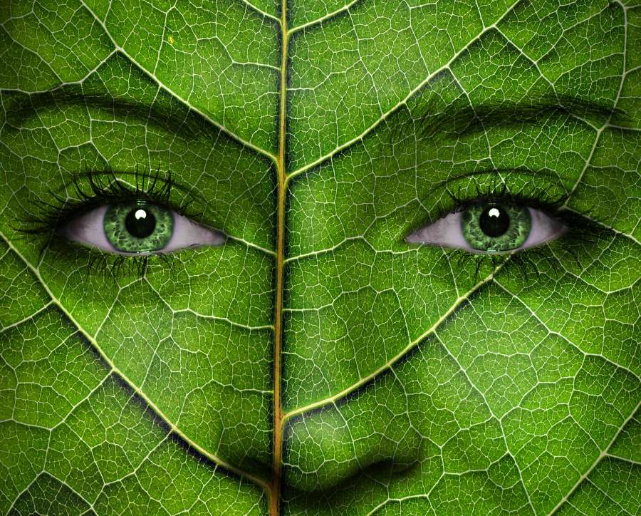 Envy Green Eco friendly earth