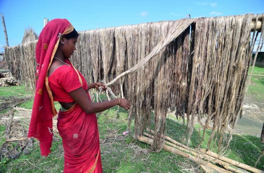 Palashbari: A woman dries sheaf of jute at Palashbari, Assam on Sept 25, 2016. (Photo: IANS) by .