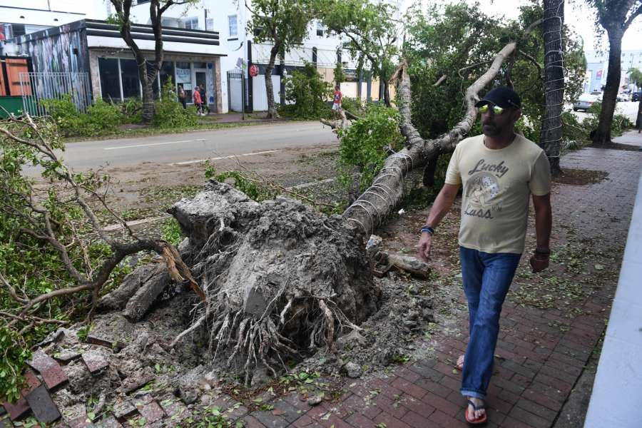 MIAMI, Sept. 12, 2017 (Xinhua) -- People walk by a tree toppled by strong wind after Hurricane Irma swept through the area, in Miami, Florida, the United States, on Sept. 11, 2017. Powerful Hurricane Irma roared into Florida and knocked out power to more than 3 million homes and businesses in Florida on Sunday. (Xinhua/Yin Bogu/IANS) by .