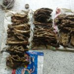Tiger bones and other parts, destined to cross the border were tracked by Wildlife Protection Society of India (WPSI), poached from Valmiki Tiger Reserve, Bihar. The forest has roughly 17 to 22 Tigers as of 2014, of which multiple cases of poaching had been reported with four in 2016 alone. by .