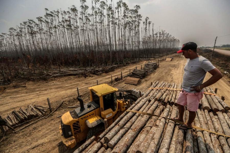 HUMAITA, Aug. 27, 2019 (Xinhua) -- Photo taken on Aug. 25, 2019 shows a destroyed eucalyptus plantation after fire in Humaita, the state of Amazonas, Brazil. BRAZIL OUT (Gabriela Biro/Agencia Estado/Handout via Xinhua/IANS) by .